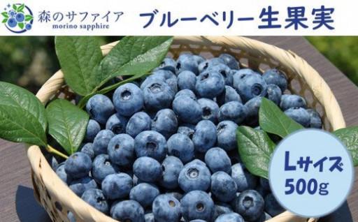 【Lサイズ】ブルーベリー生果実「森のサファイア」