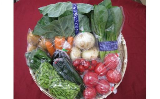 【☆新規申込開始☆】船橋産 夏野菜の詰合せ
