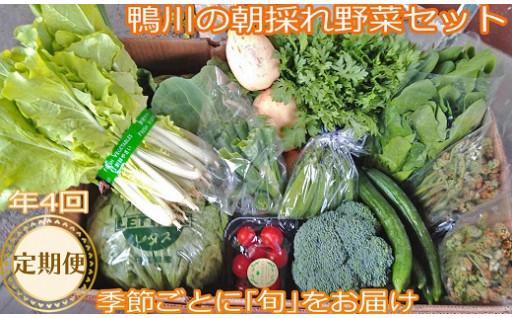 季節毎に旬の野菜や山菜を詰め合わせてお届けします