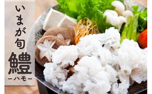 天然鱧 ハモ鍋セット(3~4人前)