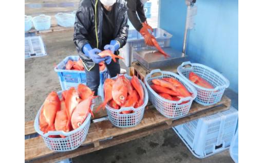 【千葉県御宿町】日帰りつりきんめ鯛が好漁です