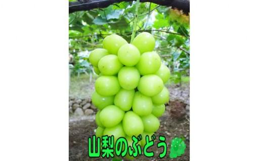 【産地直送】山梨県産大粒シャインマスカット2キロ
