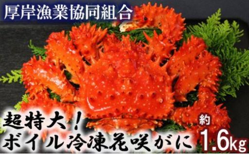 超特大!ボイル冷凍花咲がに1.6kg!