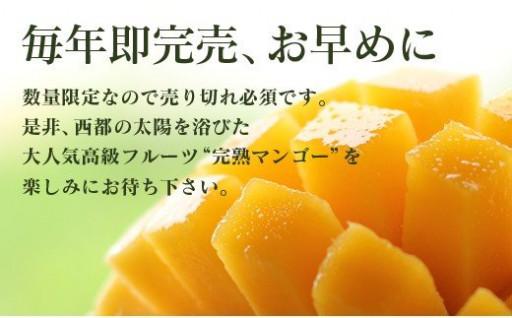酒井農園 西都産 宮崎完熟マンゴー3L×2個