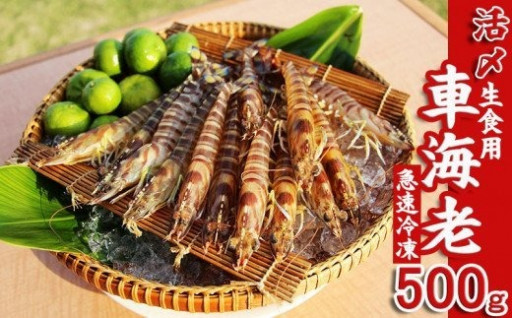 【久米島漁協】活〆冷凍車海老 生食用500g