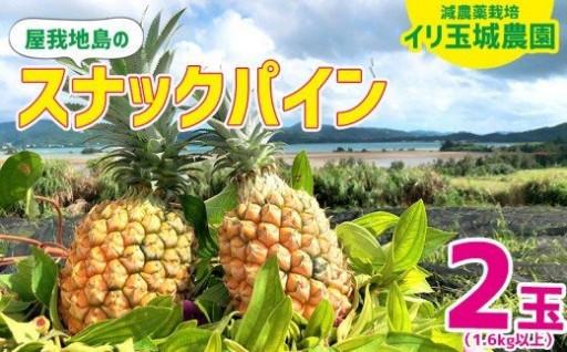 減農薬栽培スナックパイン 2玉(1.6kg以上)