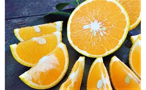 希少柑橘「スイートスプリング」の先行予約開始!