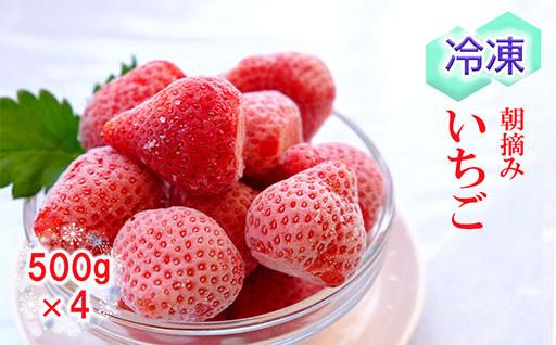 ベリー畑 冷凍いちご 2kg(500gx4)