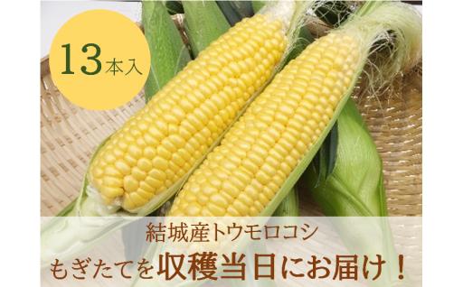 【関東限定】朝採りとうもろこしを収穫当日にお届け