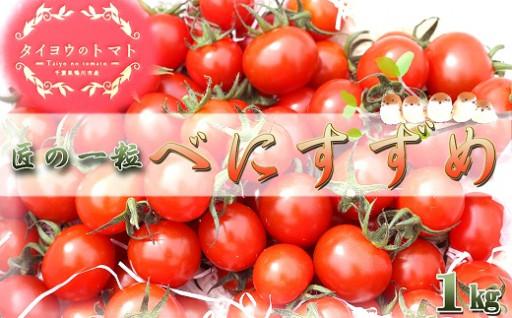 """甘いだけのトマトを脱したミニトマト🍅""""匠の一粒"""""""