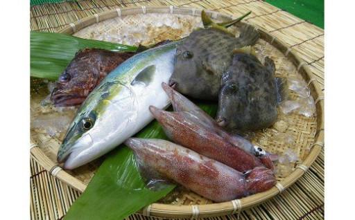 五島の鮮魚をお届けします!