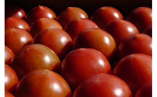 【予約限定】旬のフルーツトマトの受付開始♪