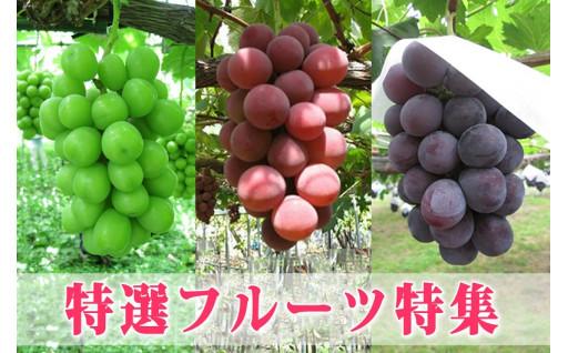 選りすぐりの秋のフルーツ集めました!