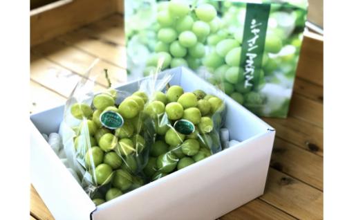 【100箱限定】芳蔵園の大粒シャインマスカット