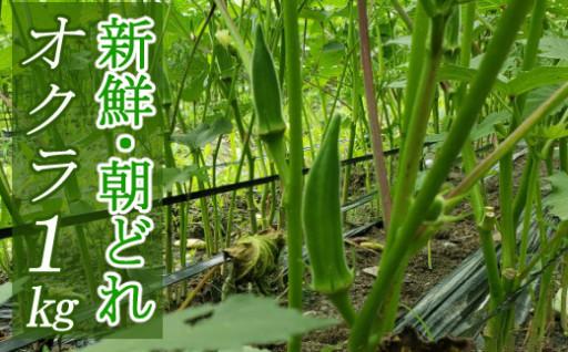 今だけ!夏野菜~オクラ~朝どれ1kg~