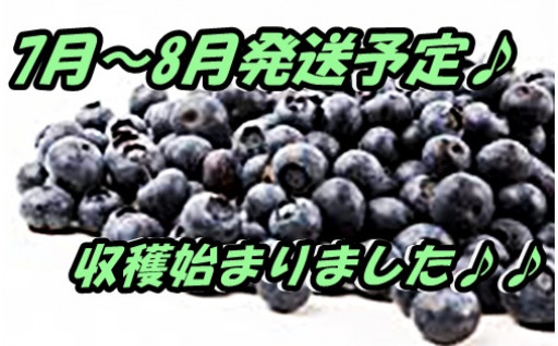 国産無農薬ブルーベリー1kg限定品
