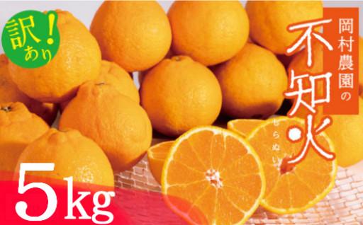 【先行予約】柑橘の王様!デコポン(不知火)5kg