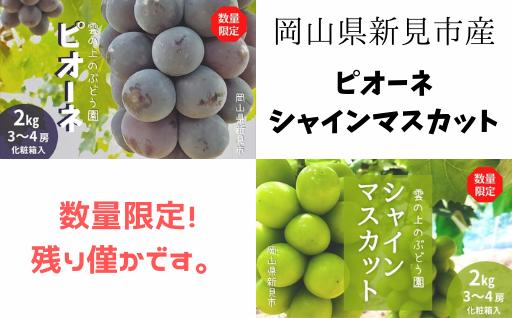 数量限定!岡山県産ピオーネとシャインマスカット