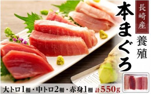 長崎産養殖本マグロ はいかがでしょうか?
