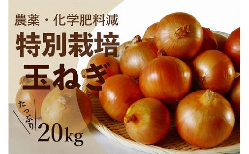 大人気! 特別栽培玉ねぎ たっぷり20kg