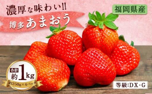 福岡県産 博多 あまおう いちご 計1kg