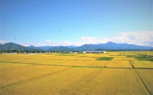 【新潟県五泉市】お米の定期便は9月20日まで!