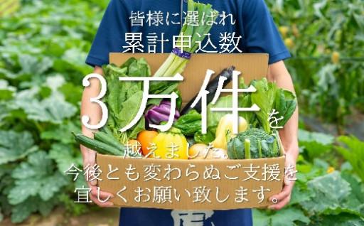 たっぷり野菜セットいっぺ北上の野菜くってけでぇ〜