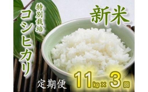 (新米)特別栽培コシヒカリ定期便(11kg×3回