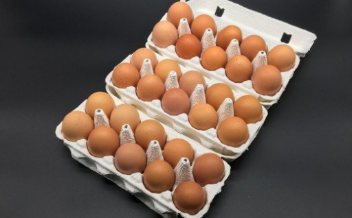 有精卵 10個×3パック(割れ保証3個含む)