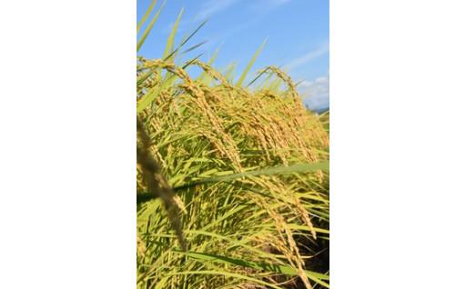 美味しいお米は「新潟おぢや」の魚沼産コシヒカリ