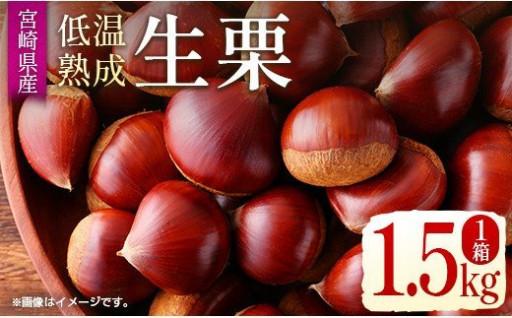 あま~い低温熟成✨生栗1.5kgがイチオシ!