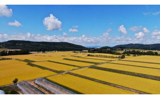 米どころ岩見沢に広がる秋の風物詩「黄金色の海」