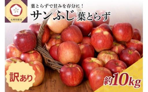 【予約】葉とらずサンふじ10kg 11,000円