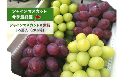 シャインマスカット最終便!