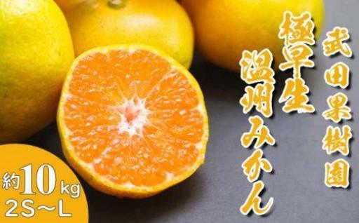 数量限定 武田果樹園の極早生温州みかん約10kg