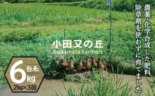 【新鮮なお米が食べたい方にオススメの2kg袋!】