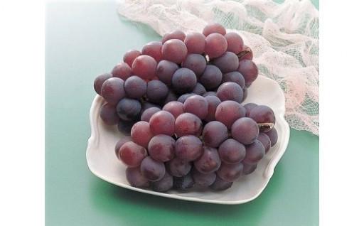 果物王国おかやまの果物をどうぞ ★(^^♪