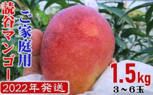 予約開始!《ご家庭用1.5kg》読谷村産マンゴー