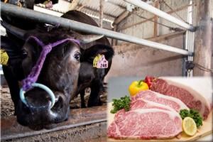 佐賀牛のイメージ写真