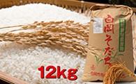 【減農薬・減化学肥料】特別栽培米 白岡そだち 彩のかがやき(12kg、新米)