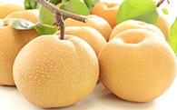白岡の梨「白岡美人」豊水梨5kg