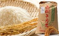 【減農薬・減化学肥料】特別栽培米 白岡そだち ミルキークイーン(10kg、新米)