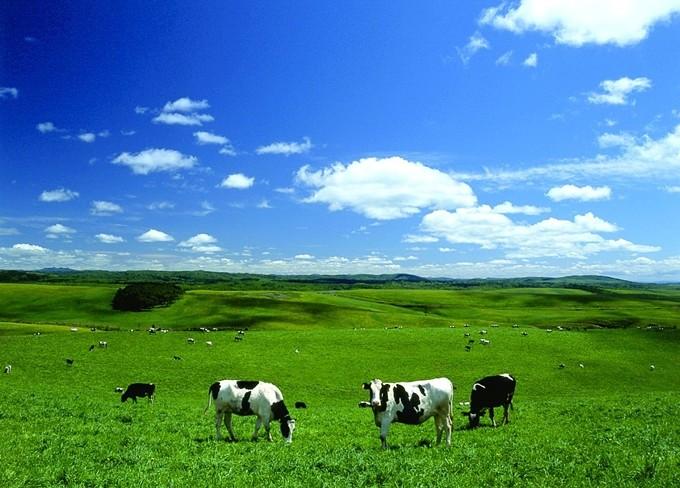 酪農のまち「北海道豊富(サロベツ)牛乳」