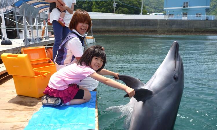 A-091 イルカと遊ぼうFor Kids(イルカとふれあい体験チケット)