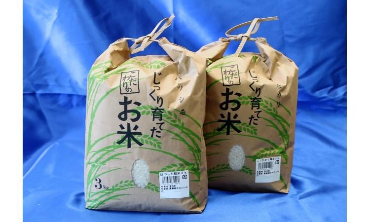 【11009】富加町のお米『コシヒカリ・ハツシモ』 各3㎏