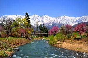 白馬三山を望み、姫川にかかる大出の吊橋。 近くには古民家や水車小屋のあるのどかな風景で、春の季節には桜をはじめとする春の花が咲き、 スケッチをする人やカメラを構える人も多く訪れる白馬村の中でも人気の絶景スポットです。
