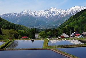 日本の伝統文化が色濃く残っていることも白馬村の大きな魅力のひとつ。 重要伝統的建造物保存地区にも選定されている青鬼(あおに)集落には、日本の原風景ともいえる景色が今も残っています。 白馬連山の壮大な山岳風景をバックに茅葺き屋根の古民家と棚田が広がるのどかな風景は、まさに心のふるさとです。
