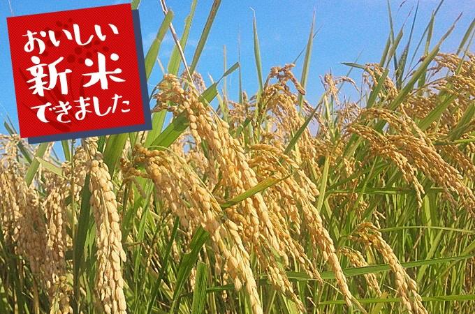 茨城県龍ヶ崎市返礼品お米
