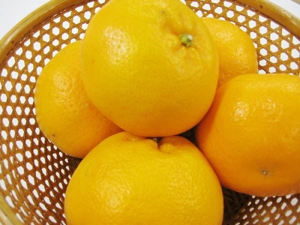 A-99 果汁が甘い!みかん(はるみ) ※1月下旬~3月初旬