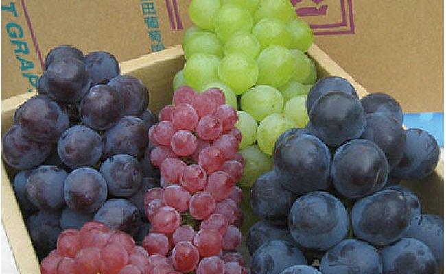 こだわりの葡萄の食べ比べ